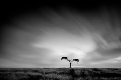 faerie-tree