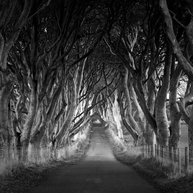 8. Dark Hedges