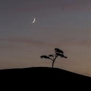 tree-and-moon-16