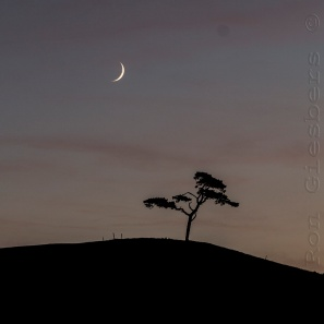 tree-and-moon-16
